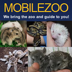 the-animals-of-mobilezoo